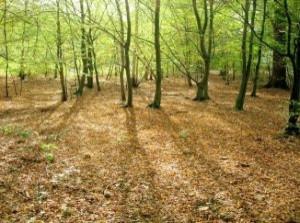 arvores-de-outono-na-floresta_2653831