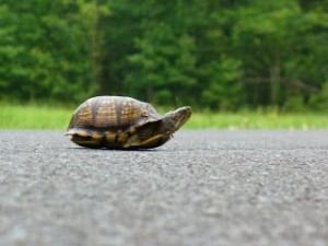 turtle on road