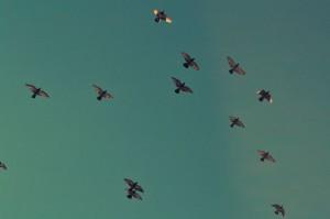 US5hzQnuTLSP9A2nSj4I_Birds