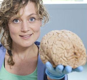 Klokhuis hersenen2