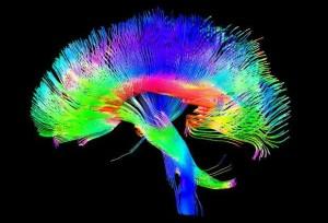 gekleurd-brein