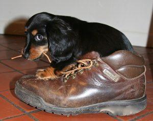 puppy-1577613_640